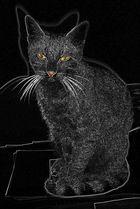 Meine Katze Assia