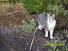 meine Katze entdeckt den Frühling
