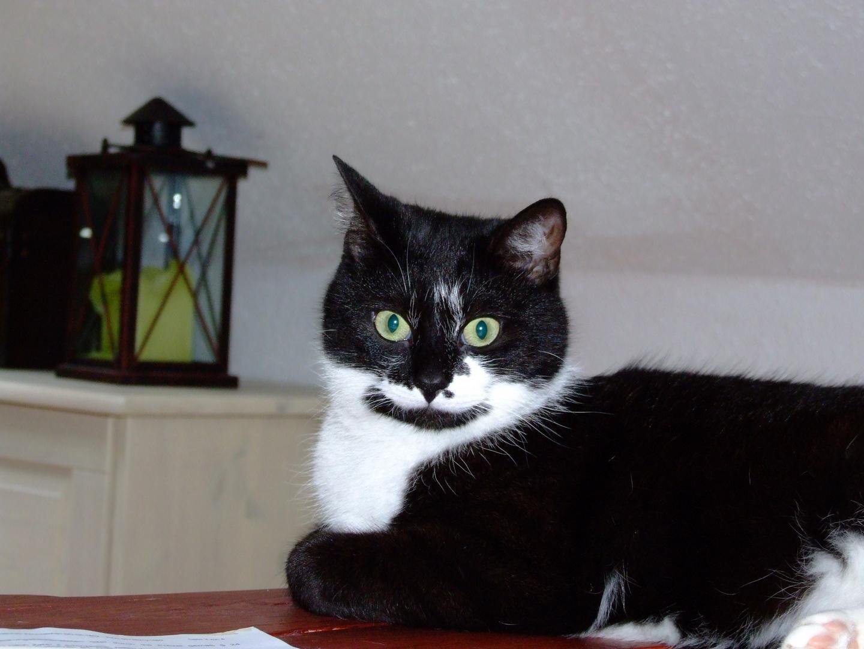 Meine Katze Heidi
