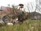 Meine Katze nach der Jagd