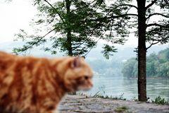 Meine Katzenfoto werden immer schärfer!