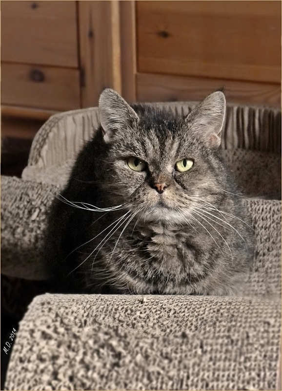Meine Katzenomi Mucki....
