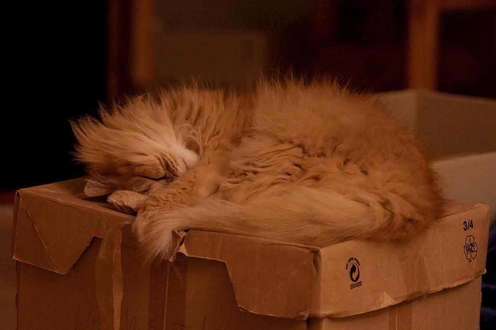 meine Kiste