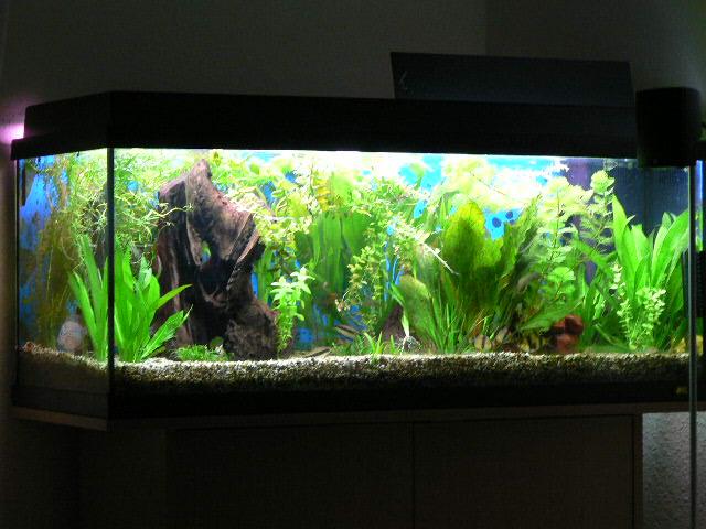 Meine kleine Fischwelt