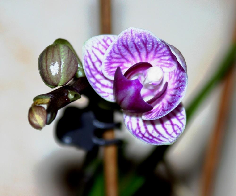 Meine kleine Orchidee ...