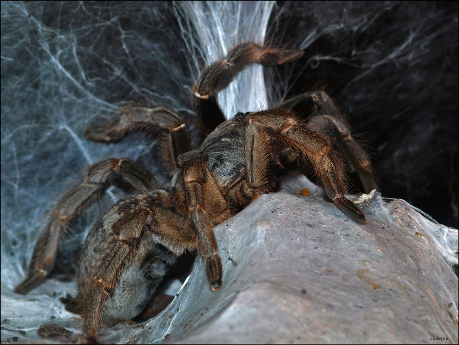 Meine Liebe zu Spinnen ...