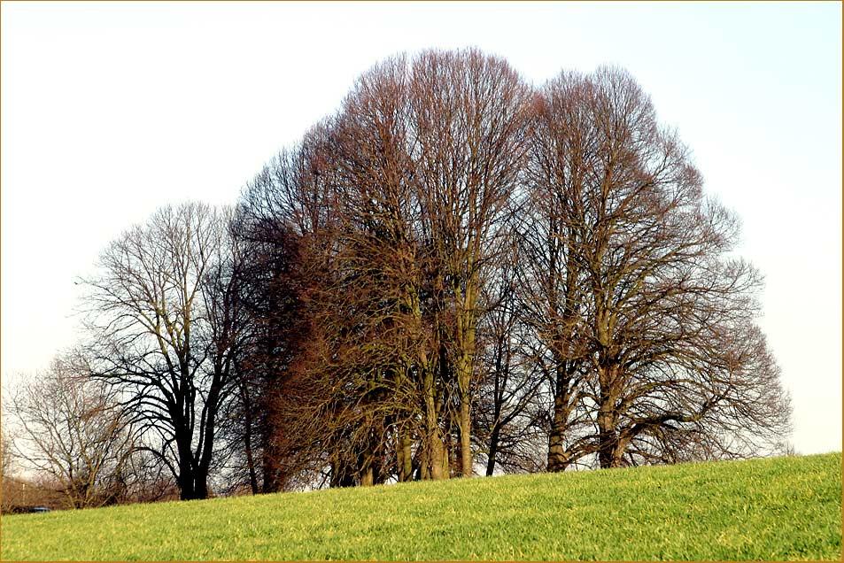 Meine Lieblings-Bäume