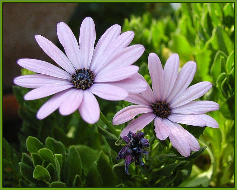 meine lieblingsblümchen