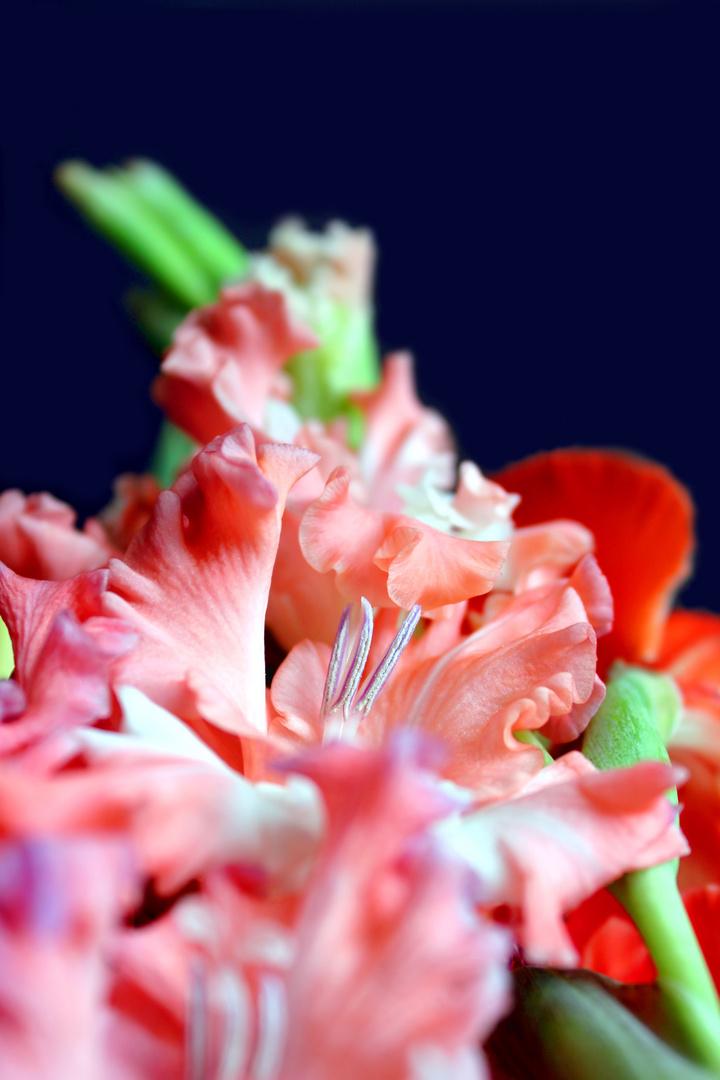 Meine Lieblingsblumen im Blumenstrauß