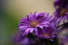 meine Lieblingsherbstblumen