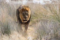Meine Löwenkamera im Einsatz