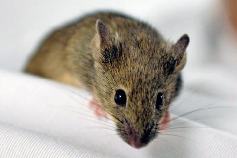 Meine Maus