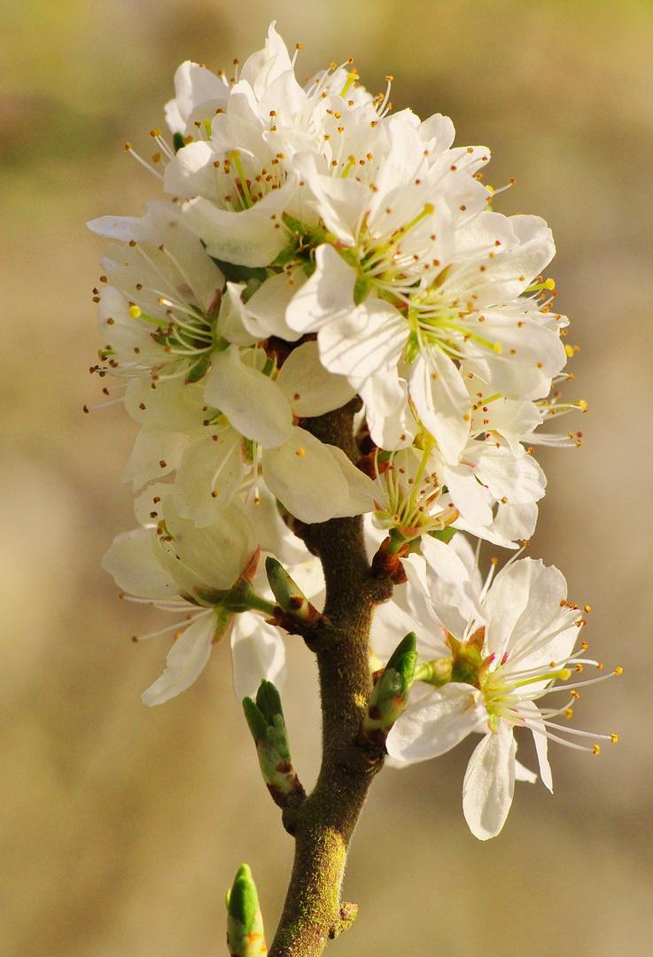 Meine Mittwochsblüten ...
