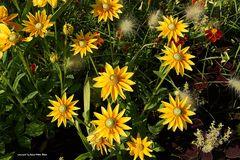 Meine Mittwochsblumen
