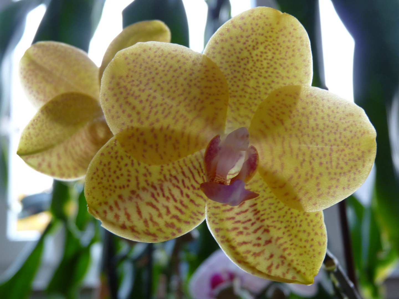 Meine neue Orchidee