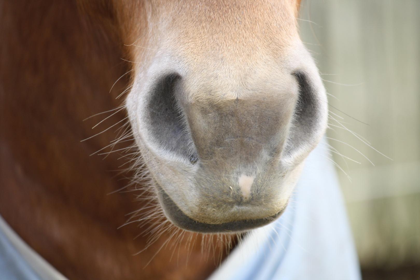 Meine Pferde Schnutte :)