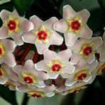 Meine Porzellanblume