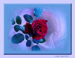 meine Rose mal anders dargestellt und verfremdet...