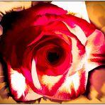 Meine Rose sollst du sein