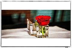 Meine Rose zum Mittwoch