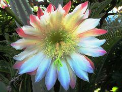 Meine schönsten Blumenaufnahmen 1