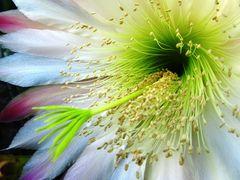 Meine schönsten Blumenaufnahmen 2