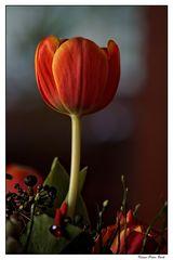 Meine Tulpe zu Ostern.....