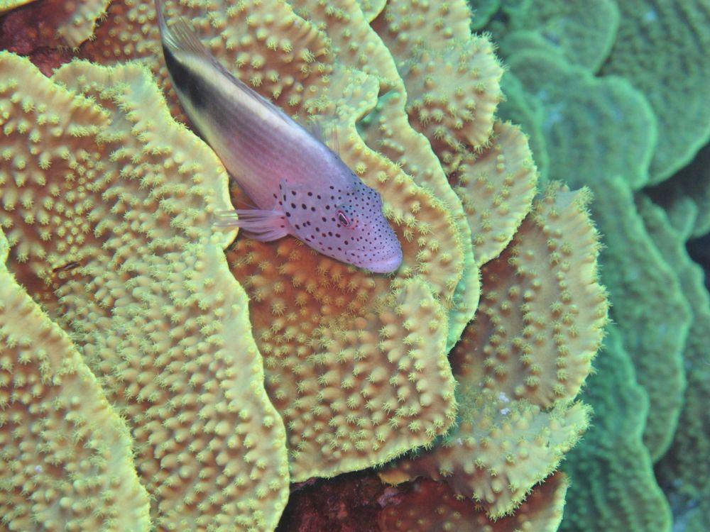 Meine Versuche in der Unterwasserfotografie