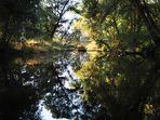 Meine Waldspiegelung mit mehr Kontrast