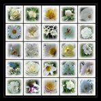 >Meine weiße Blütenpracht<