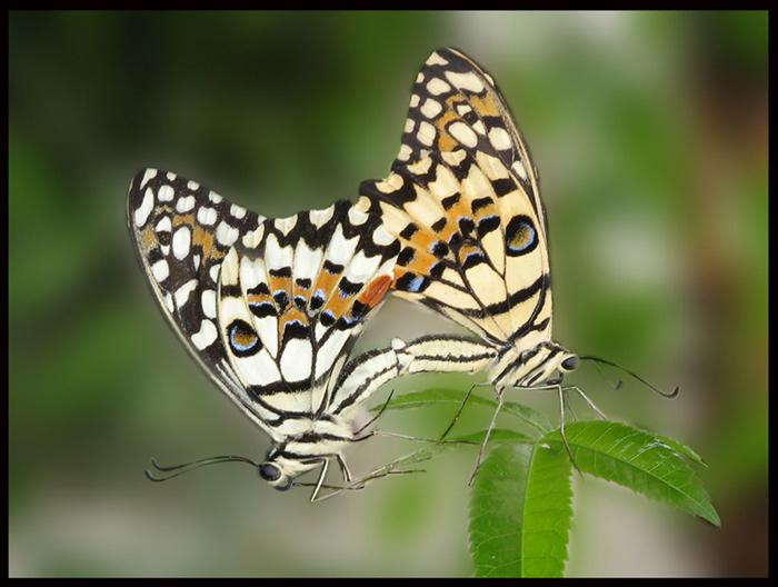 Meine wilden Schmetterlinge
