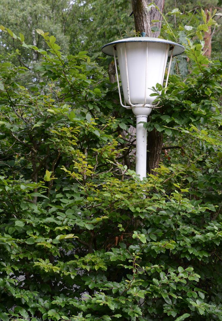 Meine Willy Brandt Straßenlampe