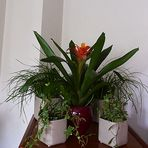 Meine Zimmerpflanzen