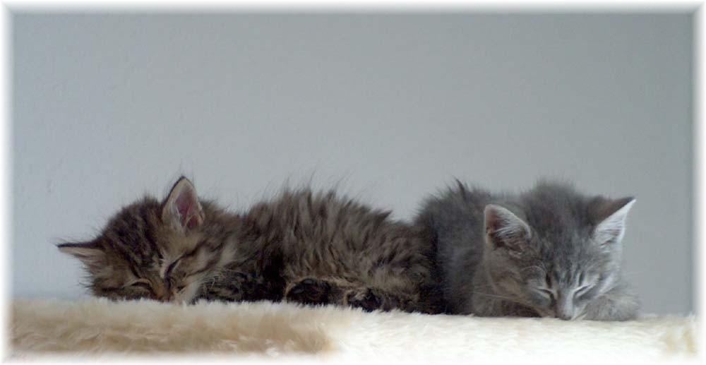 Meine zwei Findelkatzen