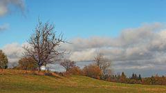 Meinem Lieblingsbaum ganz oben in 700m auf der Nollendorfer Höhe geht es gut...