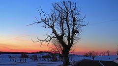 Meinem Lieblinhsbaum geht es bisher in diesem Winter noch gut