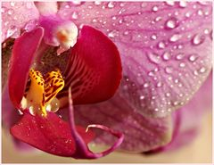Meiner Orchidee, nach dem duschen, in den Rachen geguckt :-))
