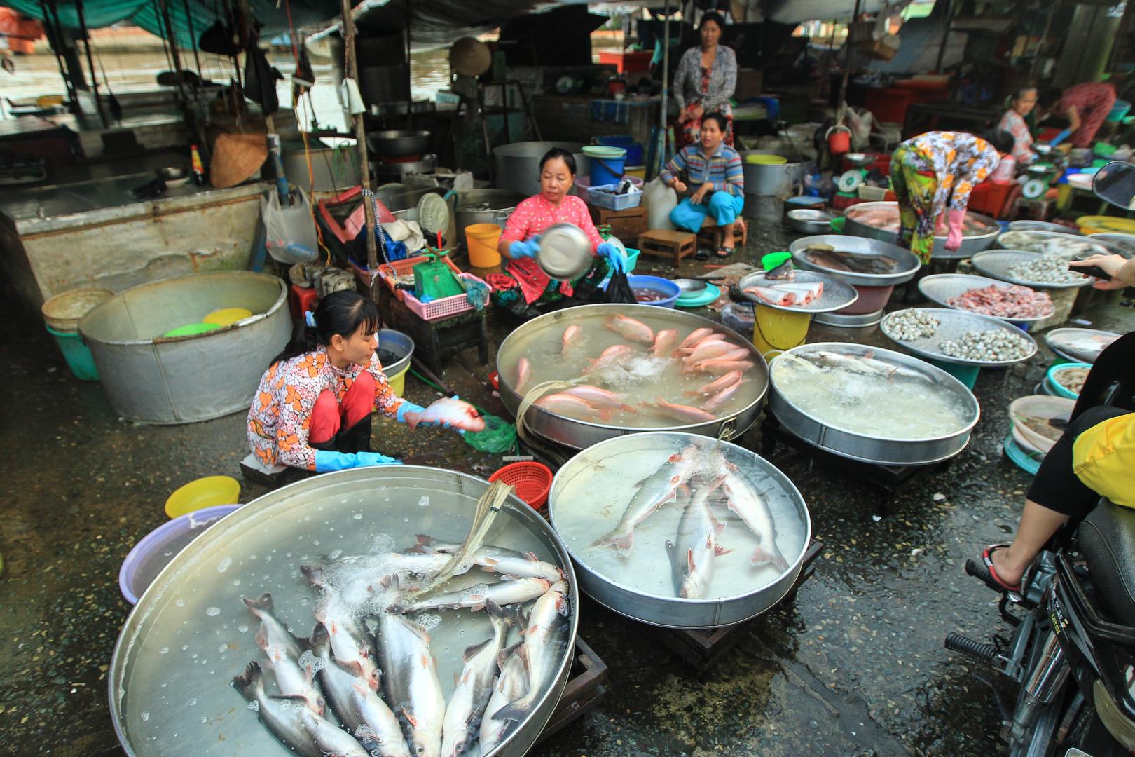 Mekong, Sadec, Fischmarkt