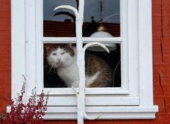 Melancholische Katze