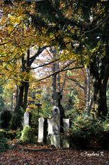 Melatenfriedhof Köln - 14
