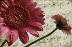 Melodie für eine Blume