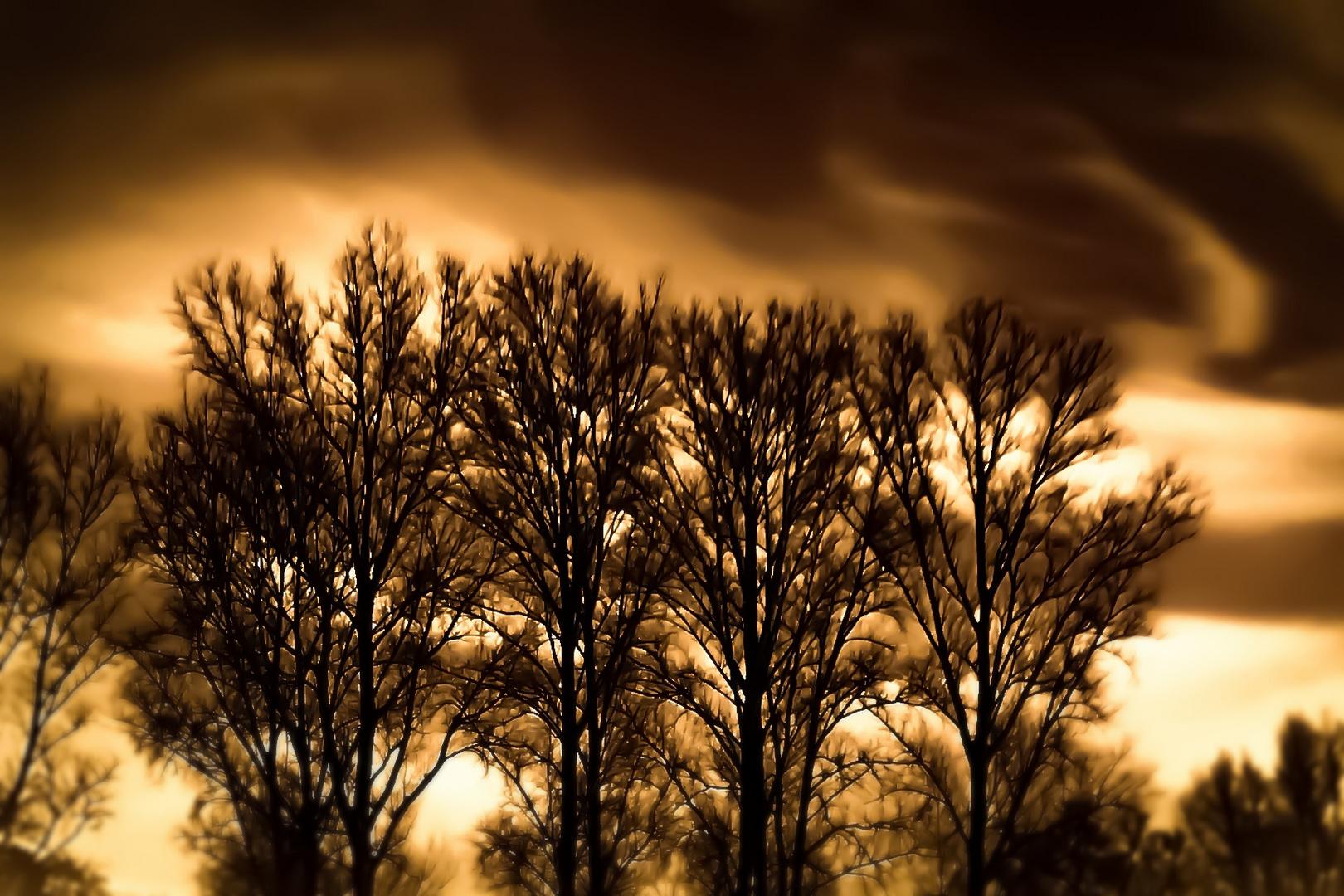 melodie.der.bäume