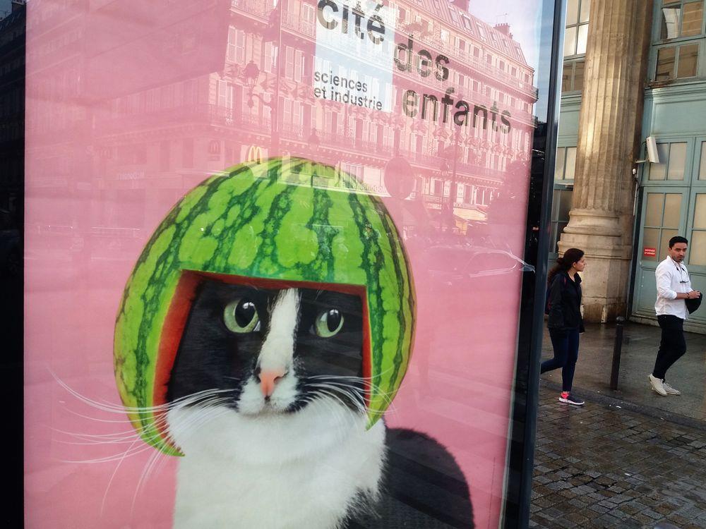 Melonen-Katze Paris J5-19 +4Fotos