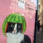 Melonen-Katze Paris J5-19 +4Fotos + fc-en-France