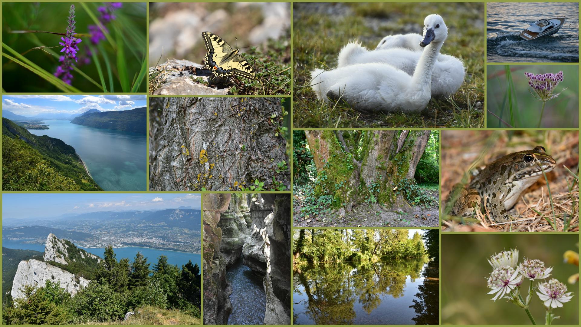 Mémoires Lac De Bourget.