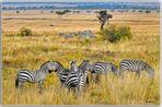 MEMORIAS DE AFRICA CEBRAS EN EL MASAI-KENIA