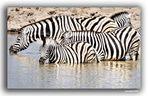 MEMORIAS DE AFRICA -CEBRAS EN ETHOSA