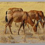 MEMORIAS DE AFRICA-CUATRO GACELAS PN ETOSHA-NAMIBIA