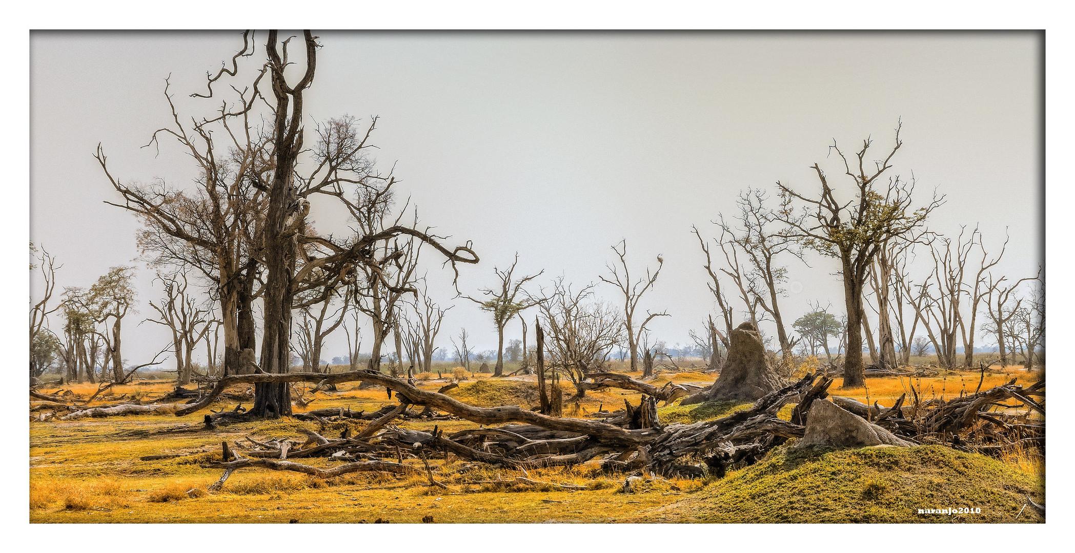 MEMORIAS DE AFRICA-EL BOSQUE PETRIFICADO-2 PN MOREMI -BOSWANA