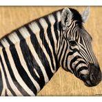 MEMORIAS DE AFRICA -LA CEBRA-ETHOSA-NAMIBIA